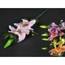 Květina lilie MIX